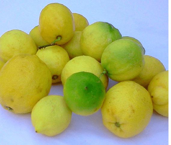citrons bio pour crème au citron